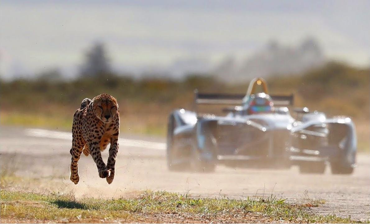 Who Is Fastest? Formula E Car vs Cheetah
