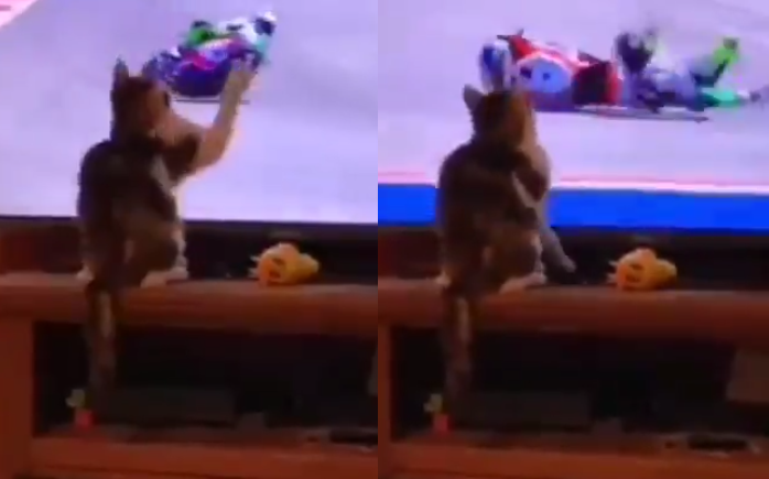 This MotoGP Driver Learned Not Mess With This Cat