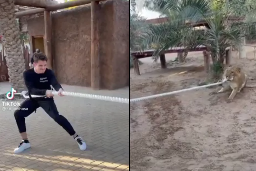 VIDEO: Charles Leclerc Having A Battle With A Tiger In Dubai